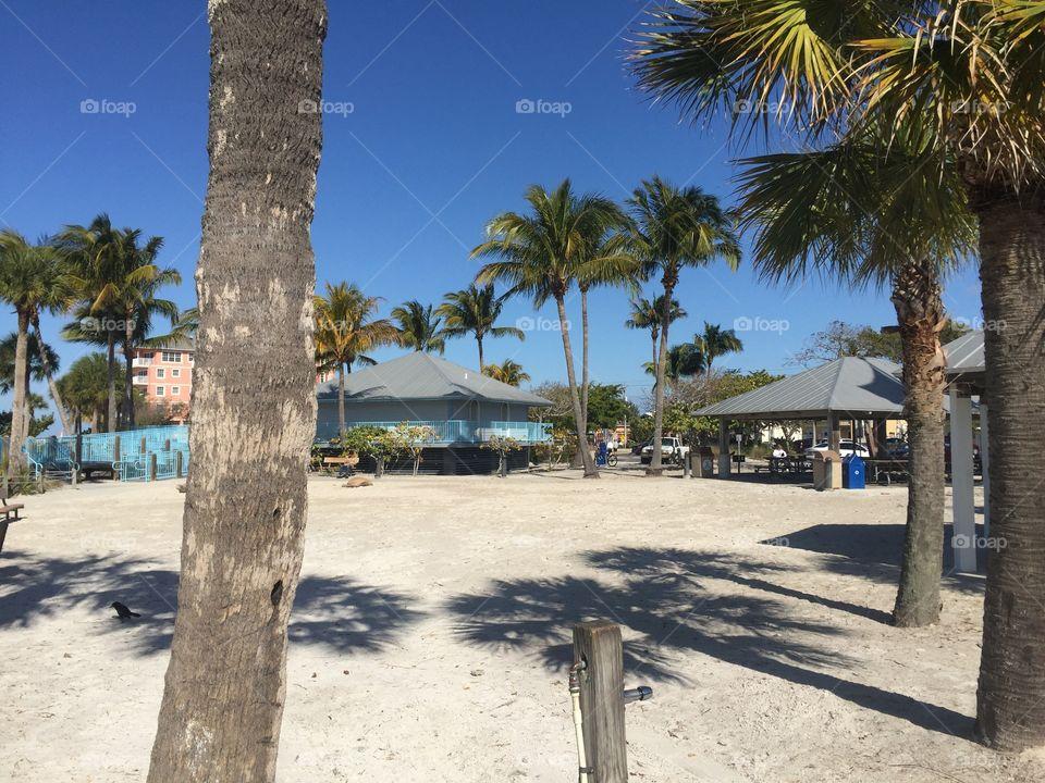 Palm, Beach, Tree, No Person, Tropical