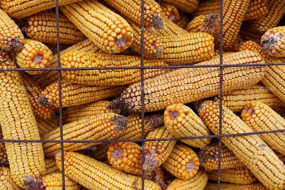 Yellow corn in columns