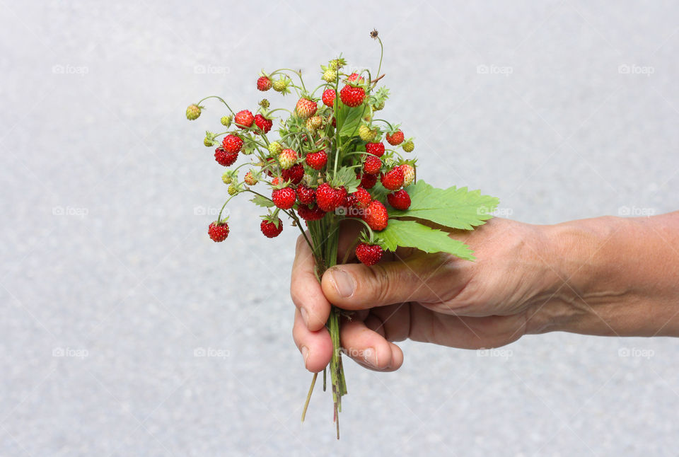 Holding wild strawberries