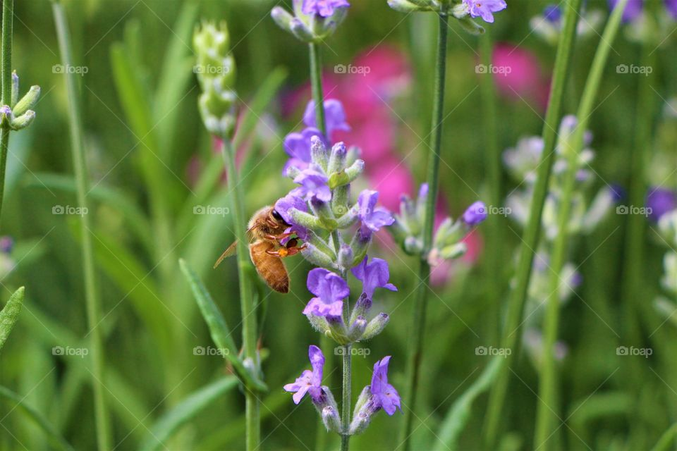 bee and wildflower