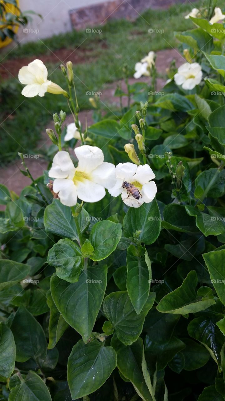 Small bee on white flower