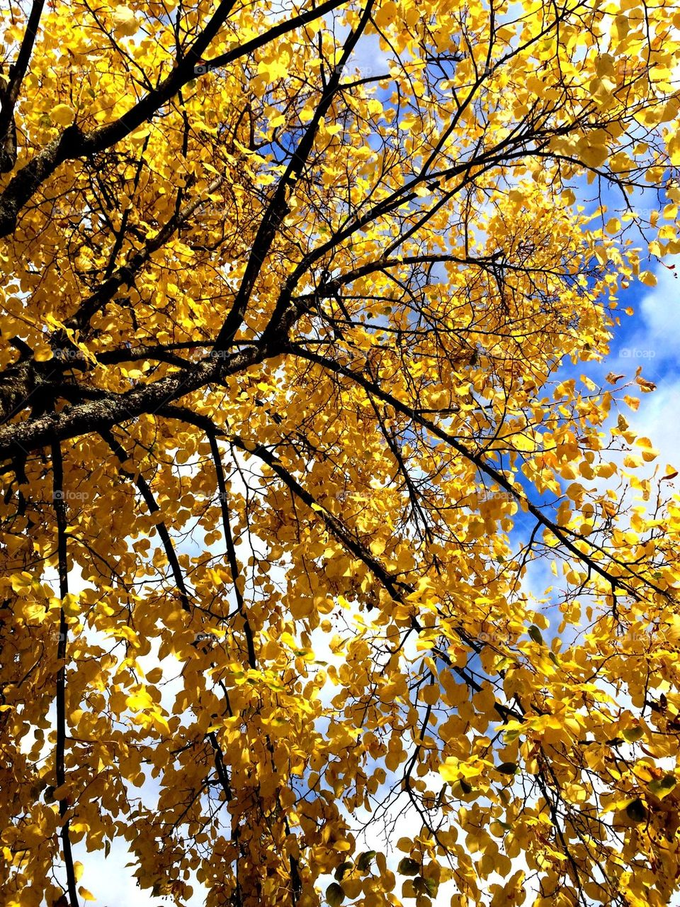 Yellow autumns