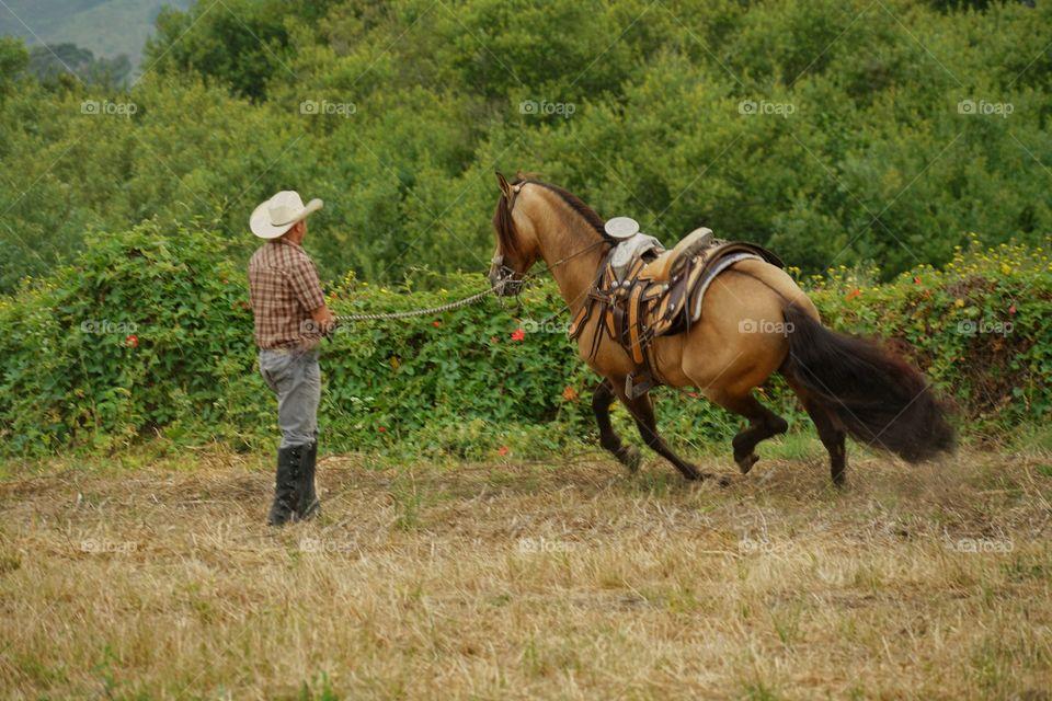 Cowboy Training A Horse