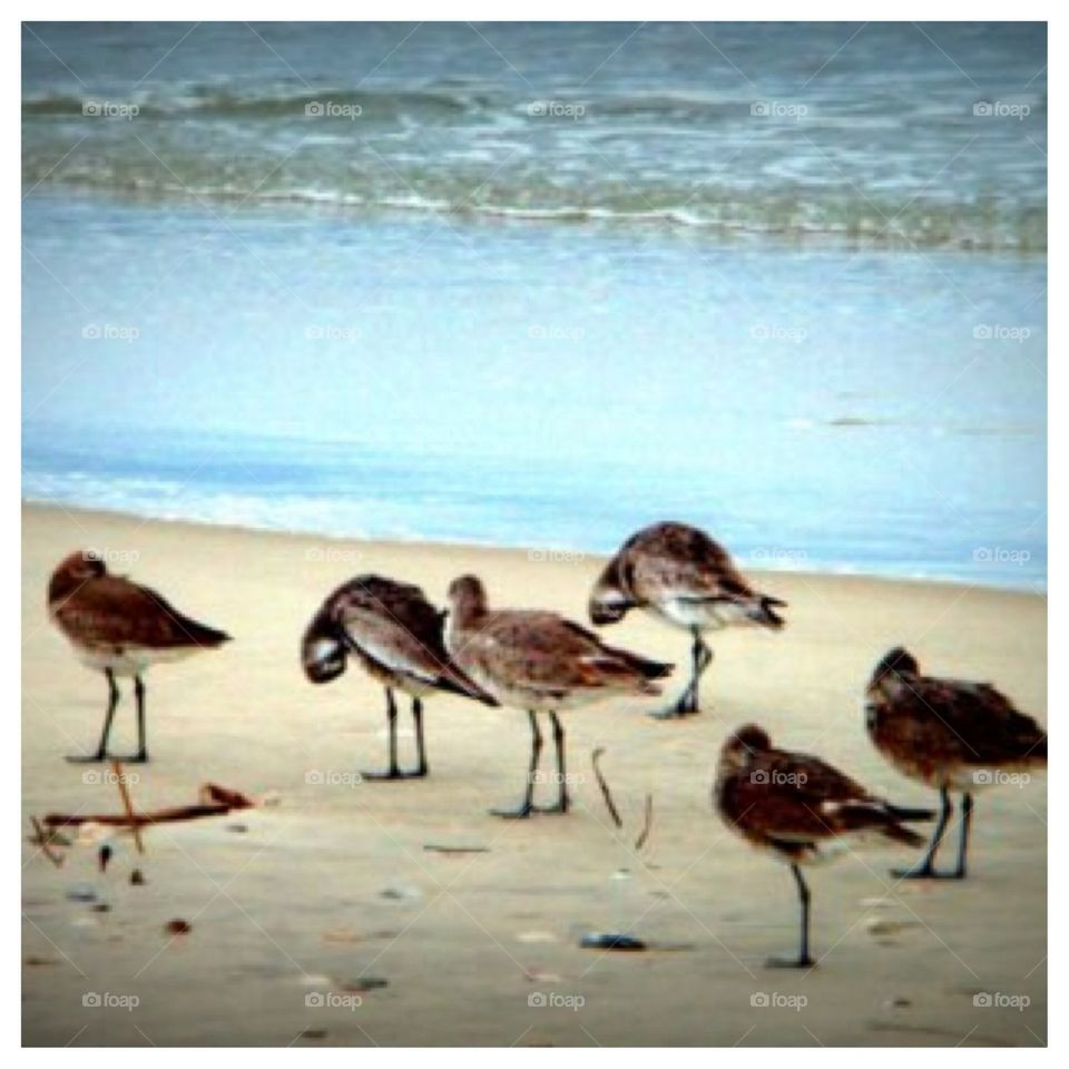 Seagulls' Winter on Outer Banks