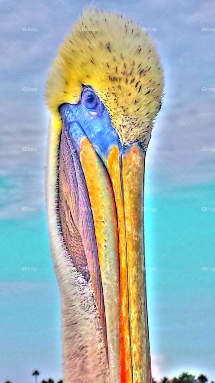 """""""CHARLIE THE PELICAN"""""""