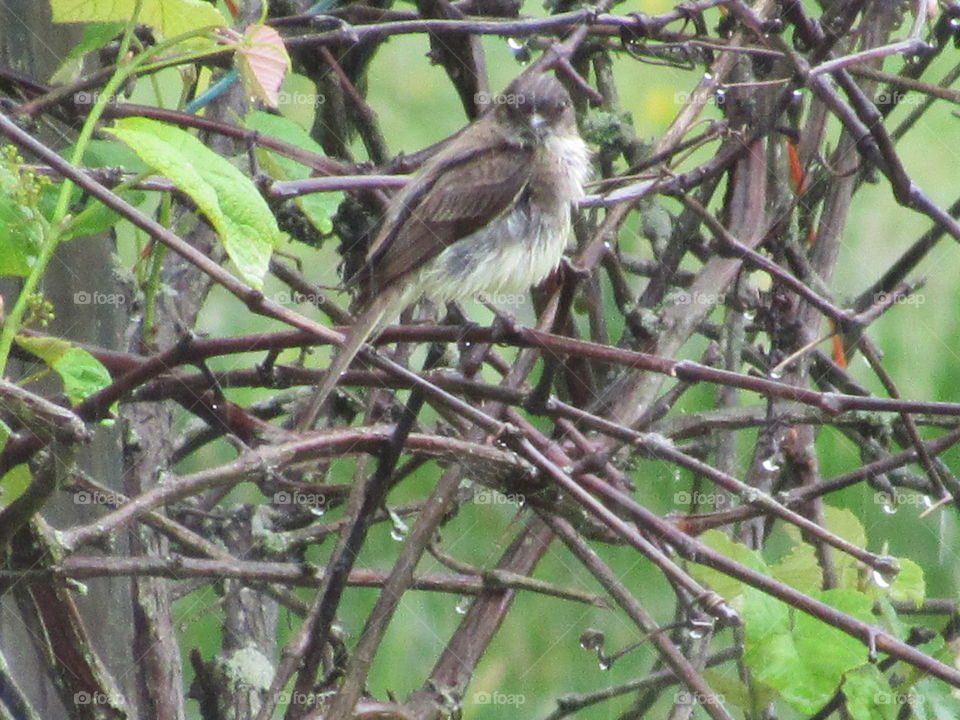 Bird, Wildlife, Nature, Animal, Tree