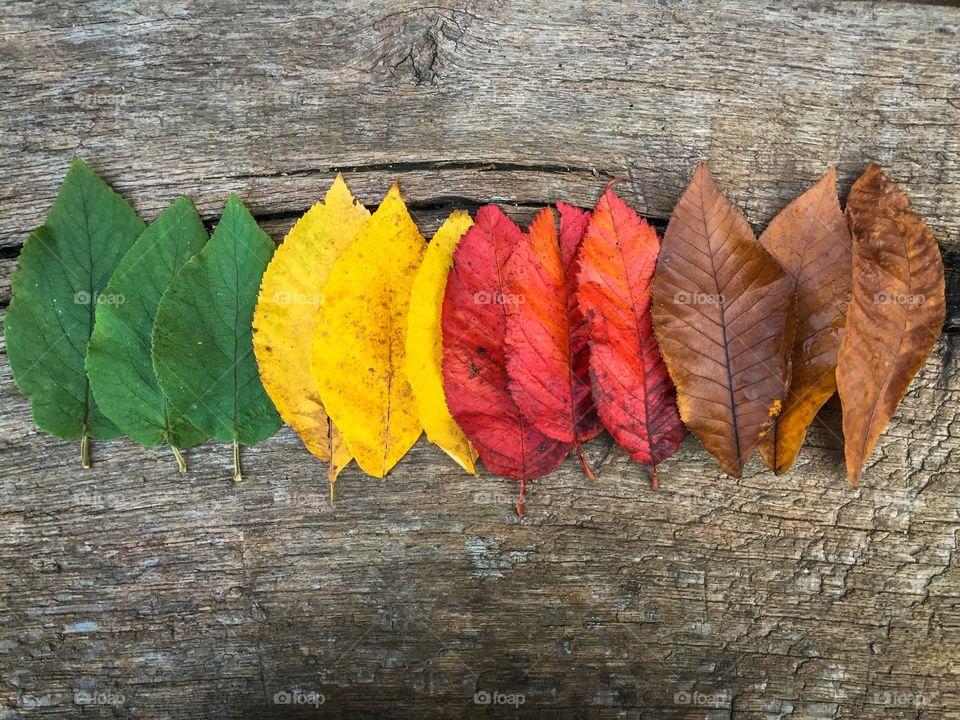 Leaves gradient