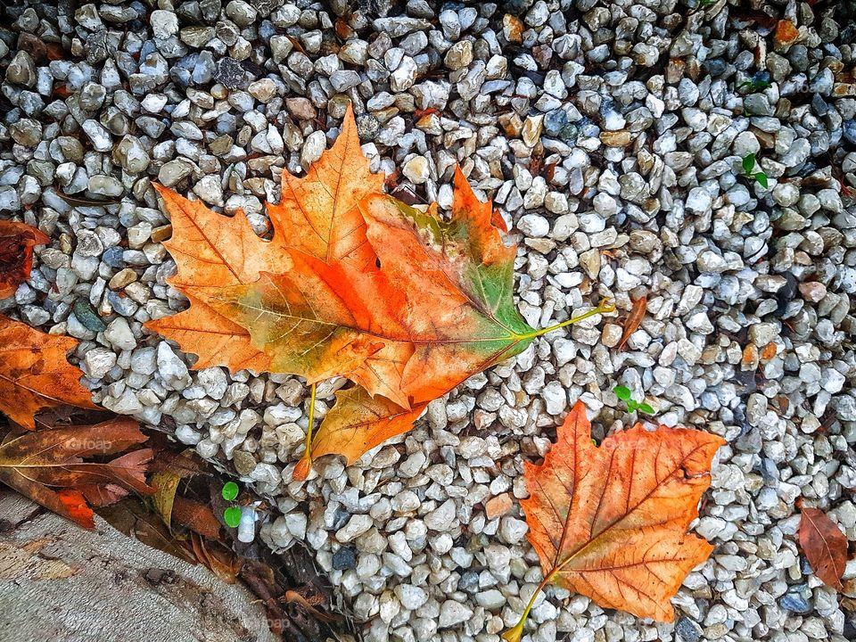 Autumn colours.