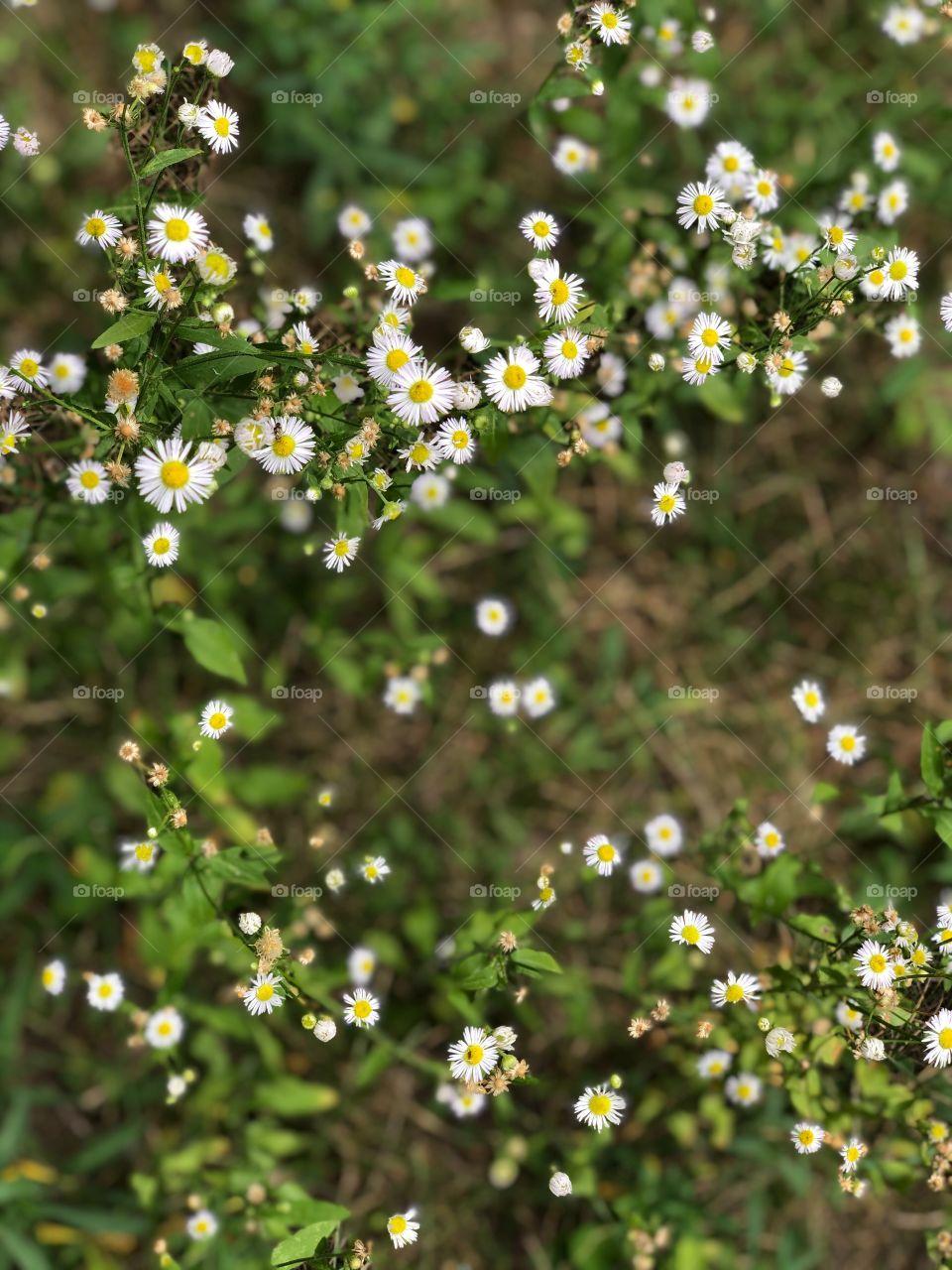 Polka dot nature - White x Green Mission