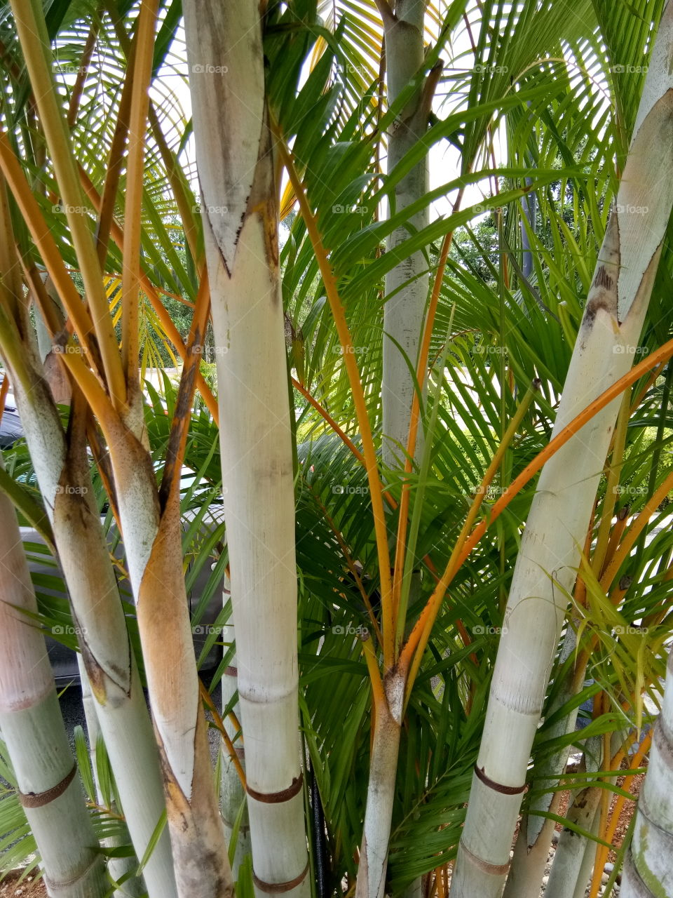 Bamboo sticks...