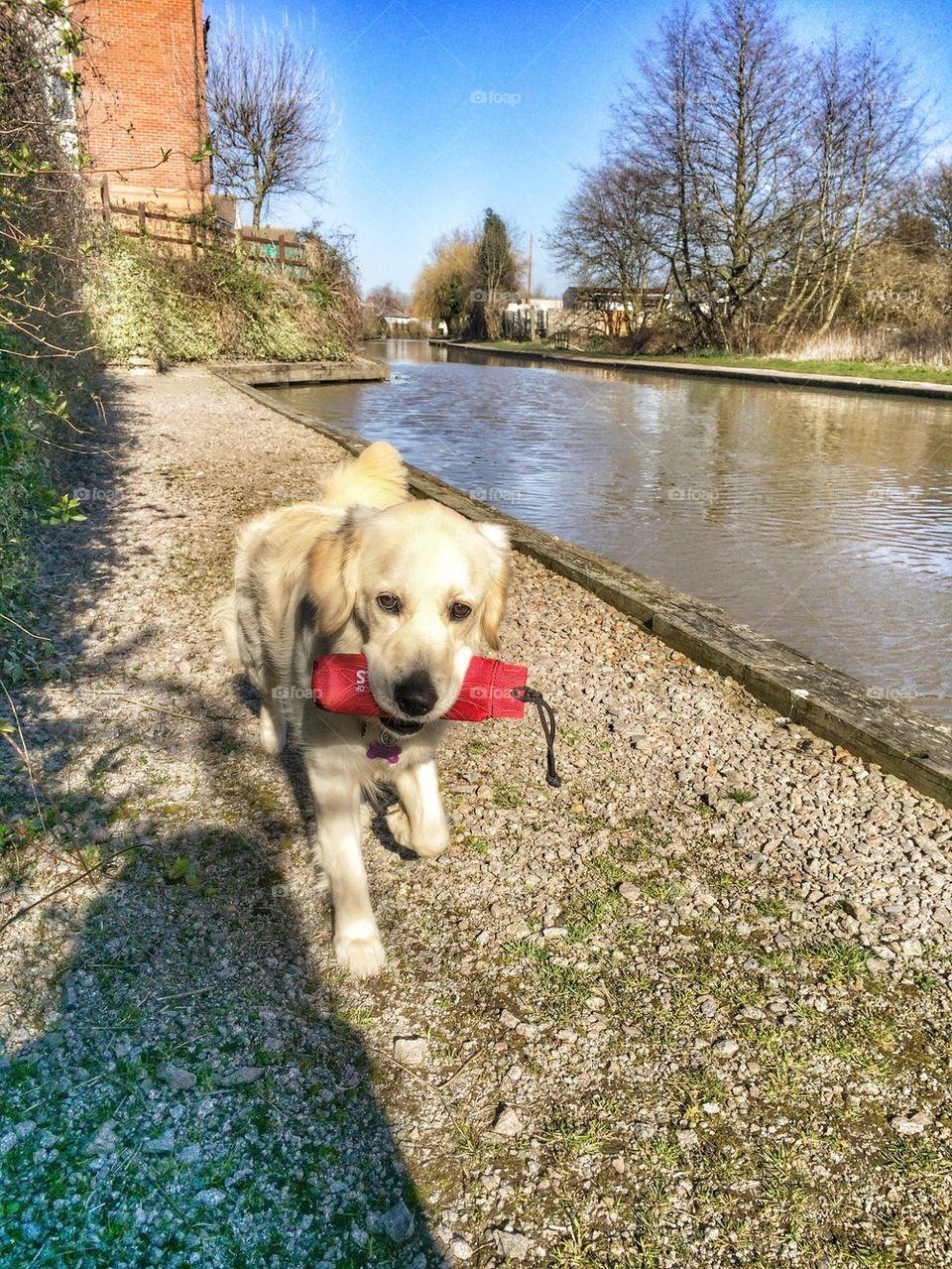 Zoe walking along the canal