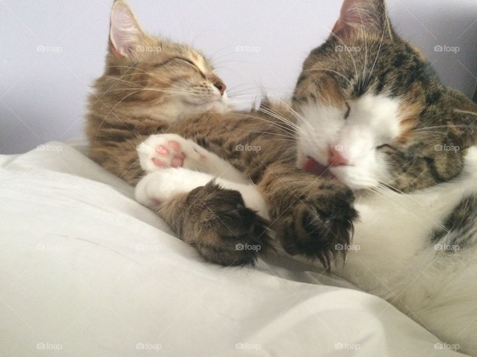 Cutest pets in the world