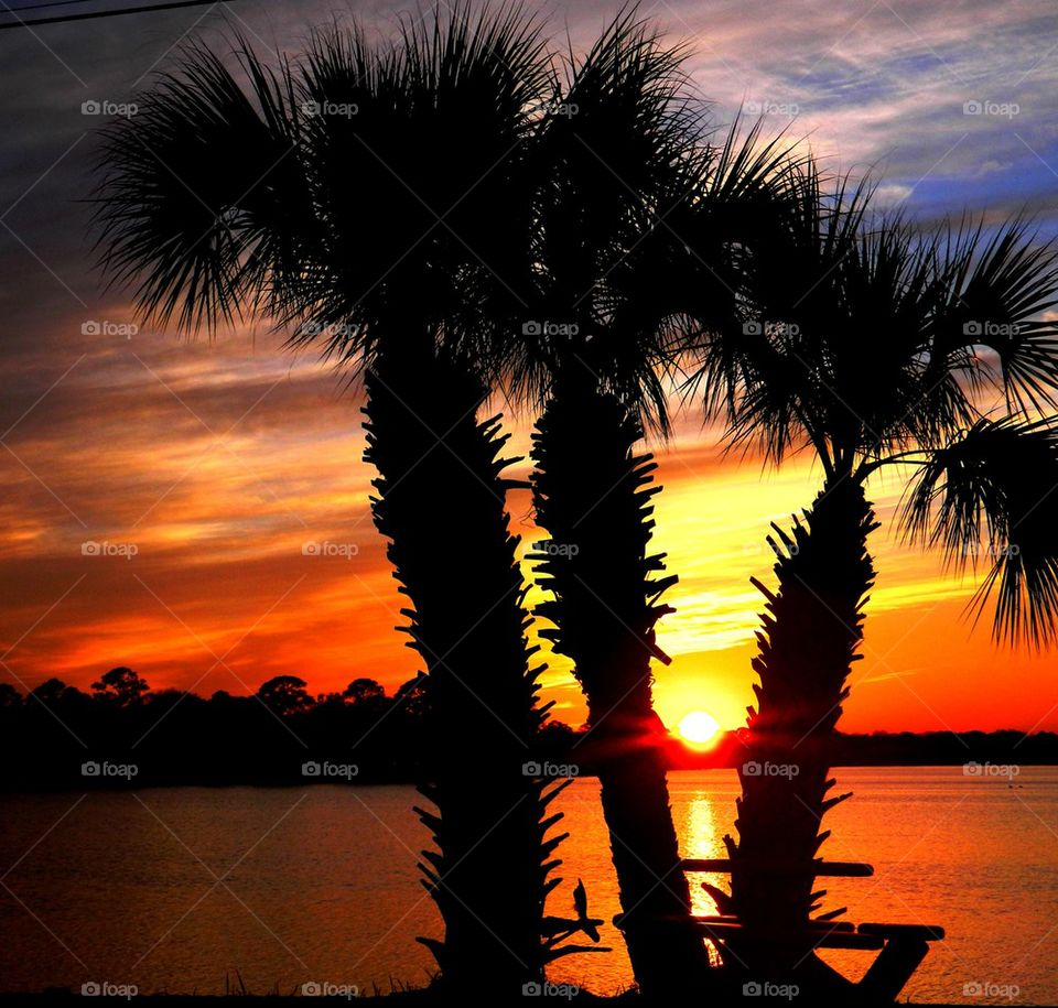 Silhouette of palm trees at beach during sunset