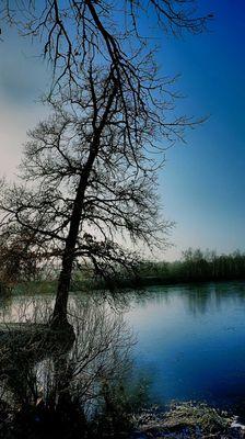 No Person, Tree, Nature, Landscape, Wood