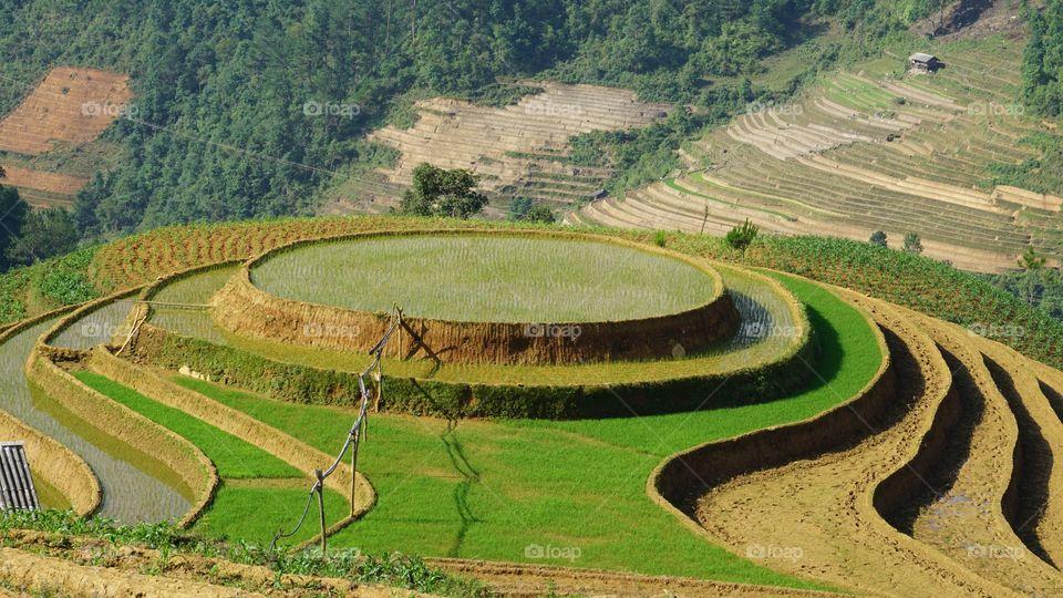 Terraces fields, MU CANG CHAI district, YEN BAI province, Viet Nam