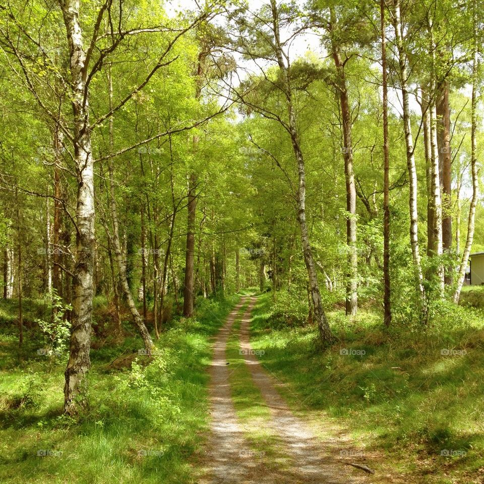 landscape green sweden nature by annajensen