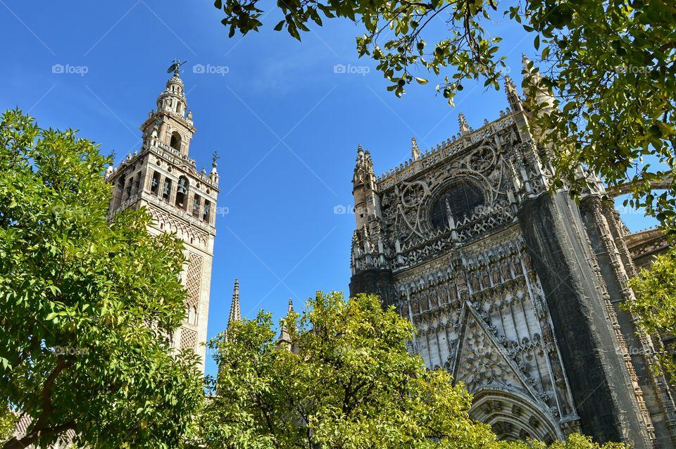 Sevilla Cathedral & Giralda. View of Sevilla Cathedral and Giralda Tower from Patio de los Naranjos