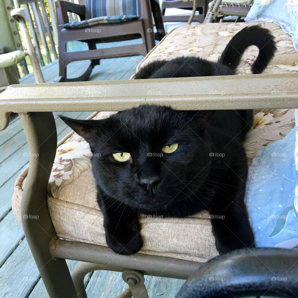 Black cat Velvet, coming to me for attention!