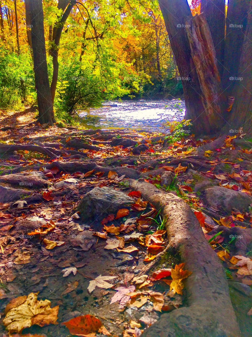 Autumn in Michigan by river.