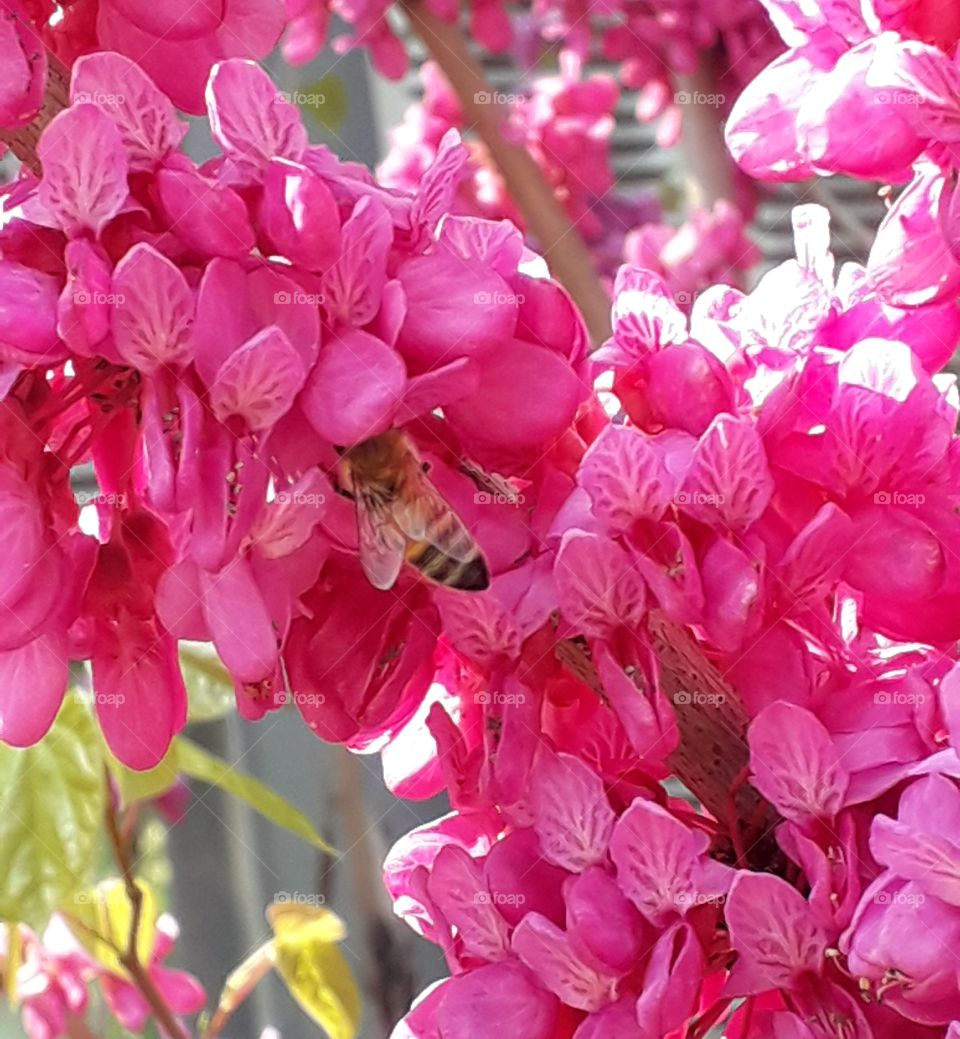 Beautiful pink flower on the tree with bee