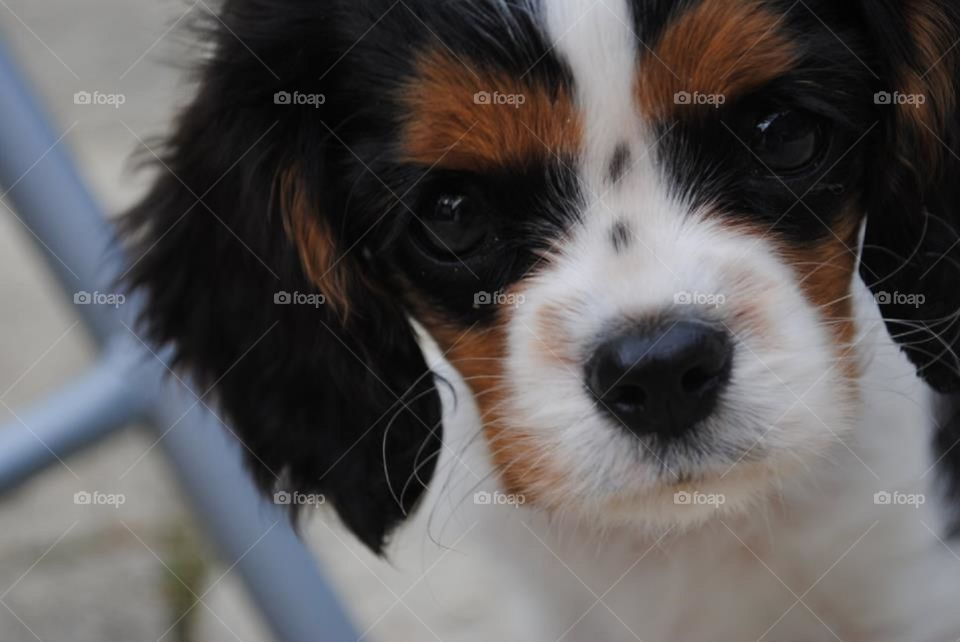 """Walter the puppy with his trademark """"serious face""""."""