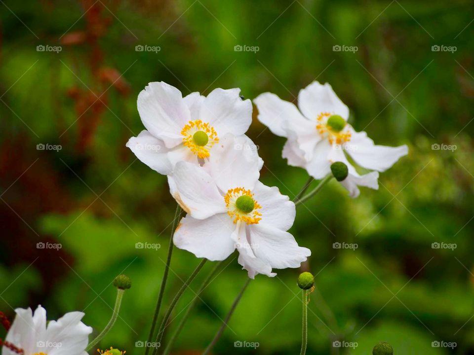 Autumn flowers