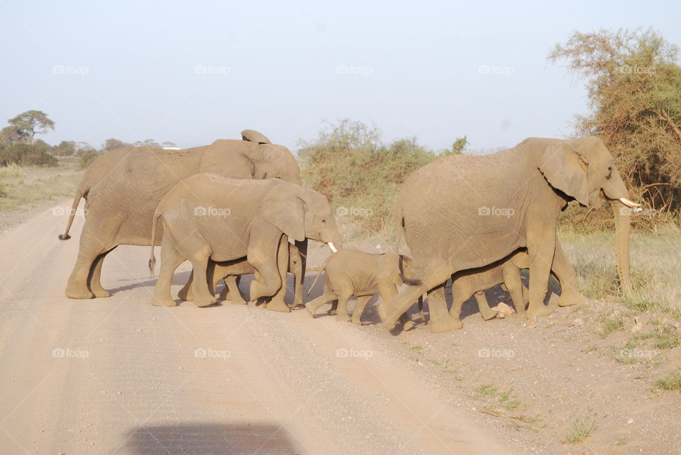 Amboseli Park - Kenya