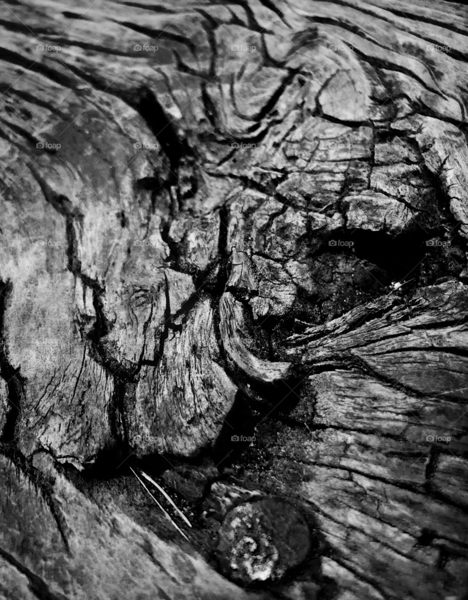 An abstract black and white photo of a gnarled piece of wood.