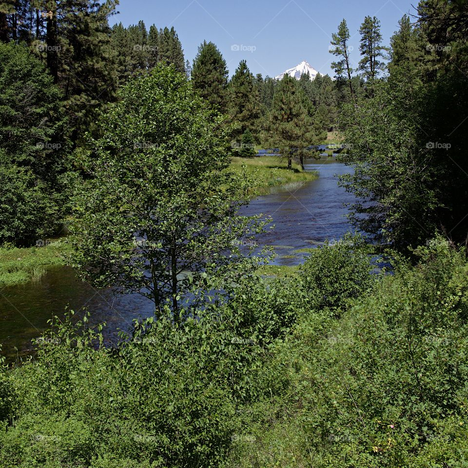 The Metolius River in Central Oregon rushes along its ponderosa pine tree and bush covered river banks with Mt. Jefferson in the background on beautiful sunny summer day.