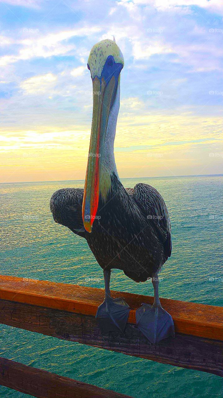 """""""Pelican On The Pier At Sunset"""""""