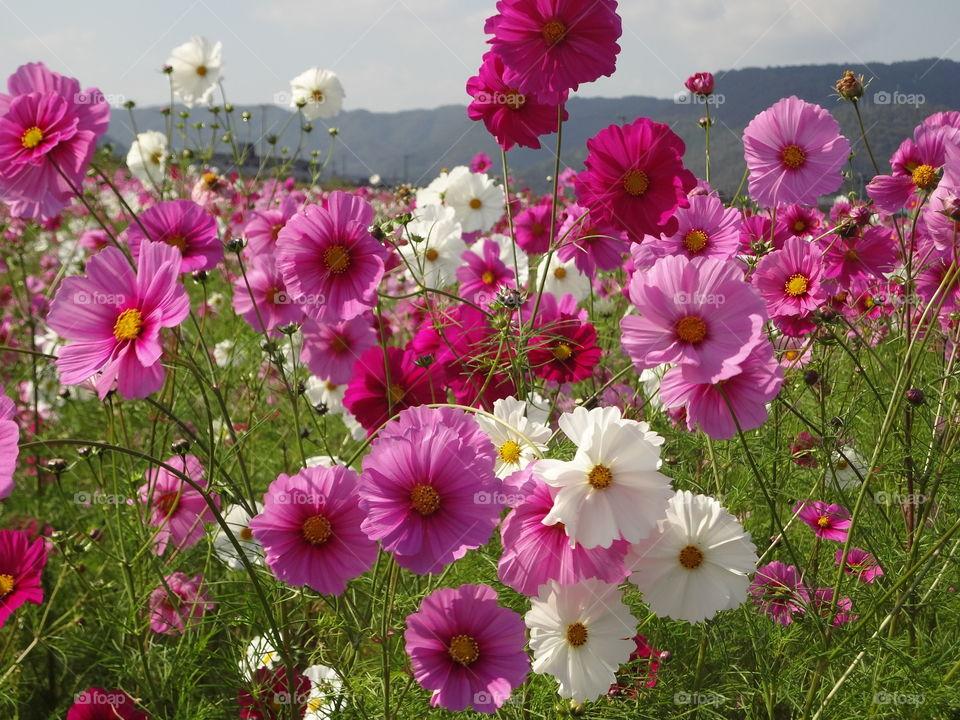 Bunga Bunga.!