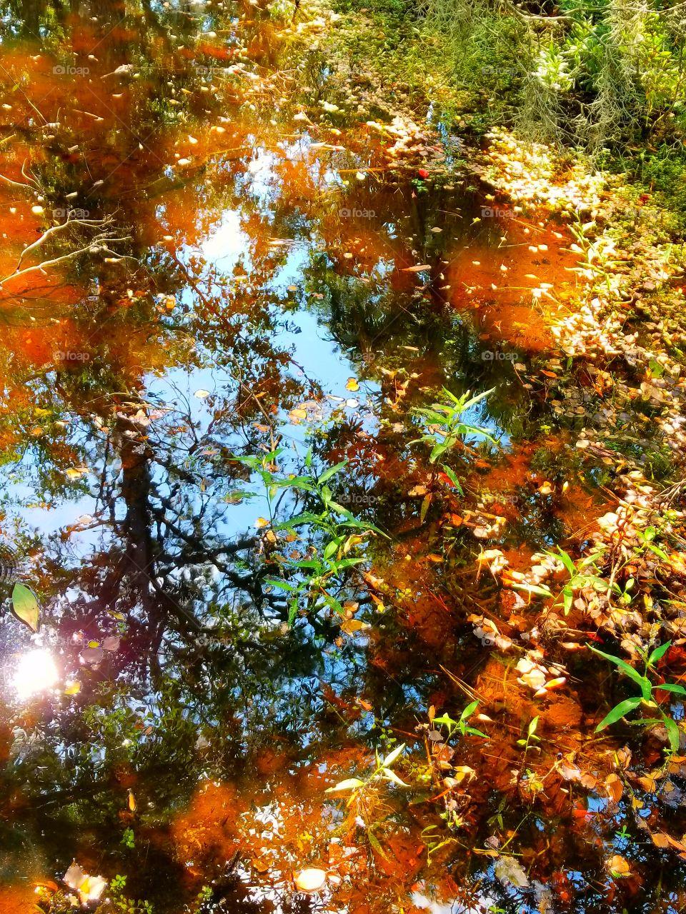 brackish pond