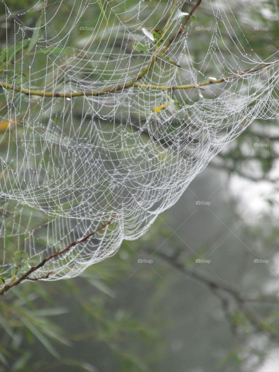 Web Design - Natural World Mission