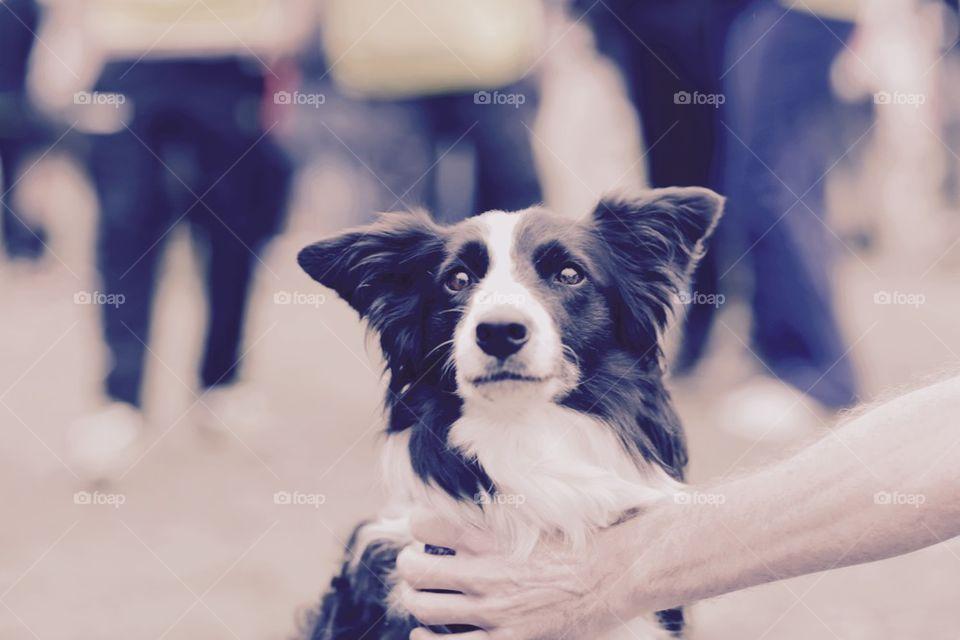 Dog at concert