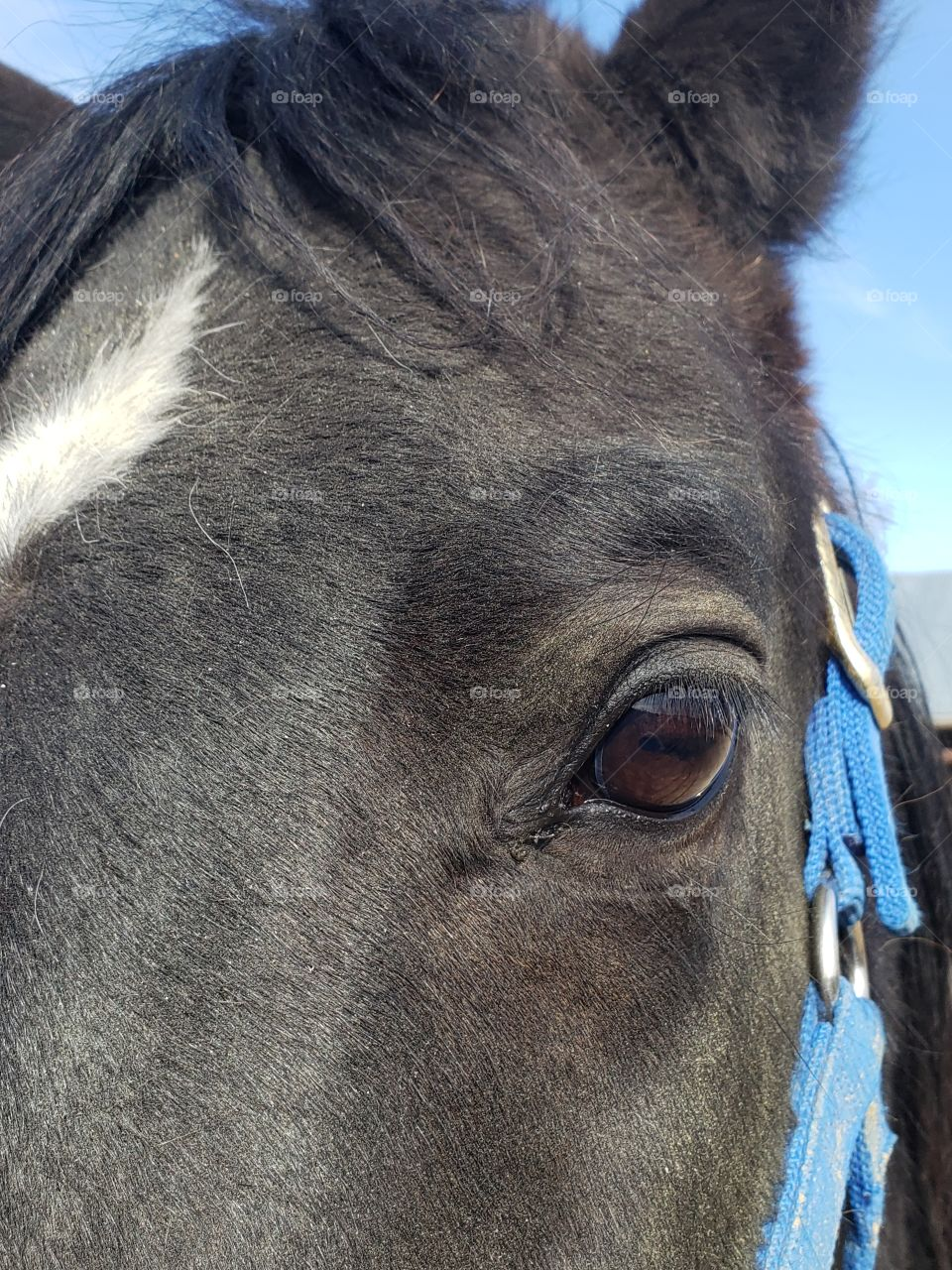 black horse eye shot