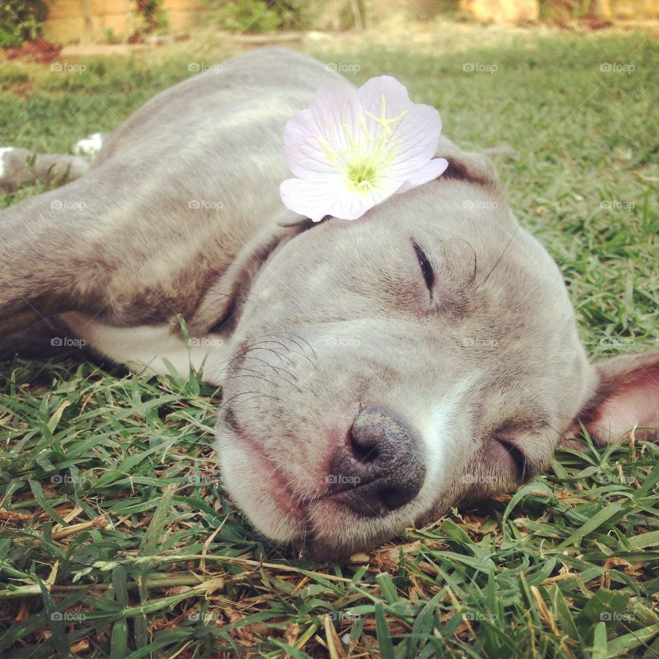 """sleeping beauty✨. """"judging a person does no define who they are, but defines who you are."""" #dontbullymybreed"""