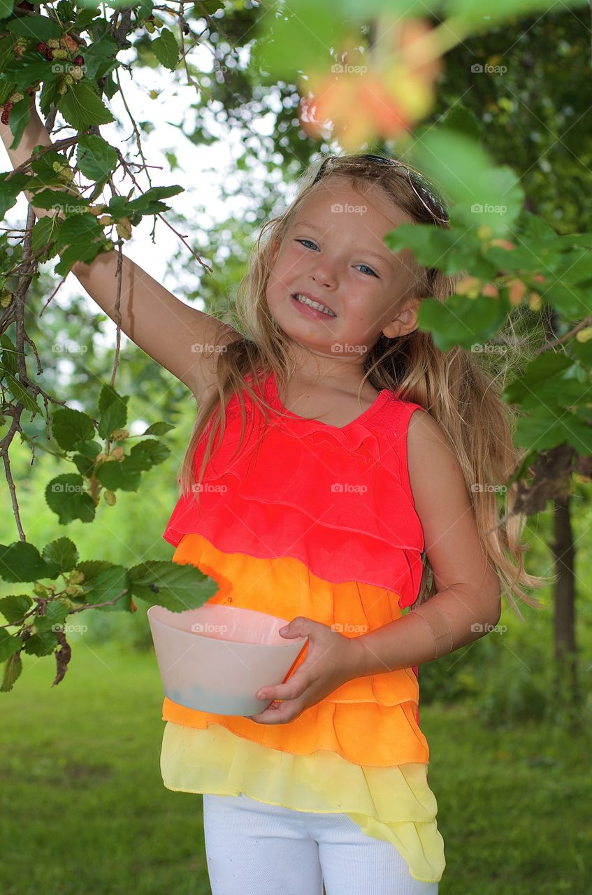 Small girl picking fresh fruit from tree