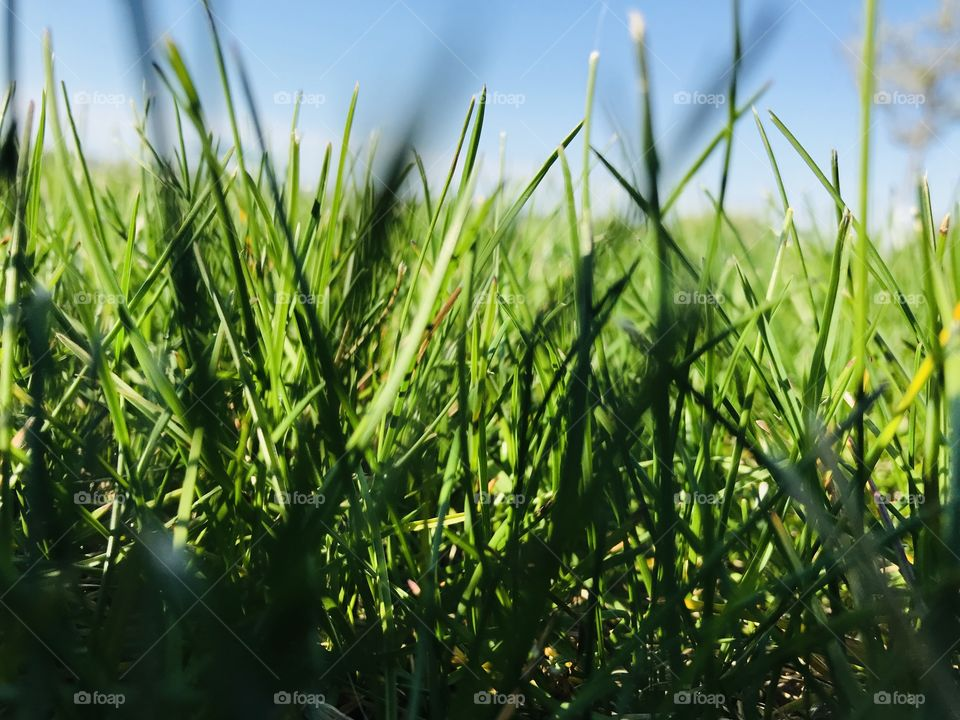 Close up green blades of grass found on nature walk on beautiful blue sky sunny day🐰