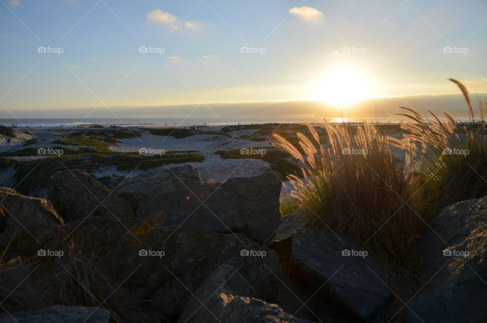 The sun is getting ready to set and sends the last warm light illuminating the vegetation growing at the beach limit on Coronado Island, San Diego.