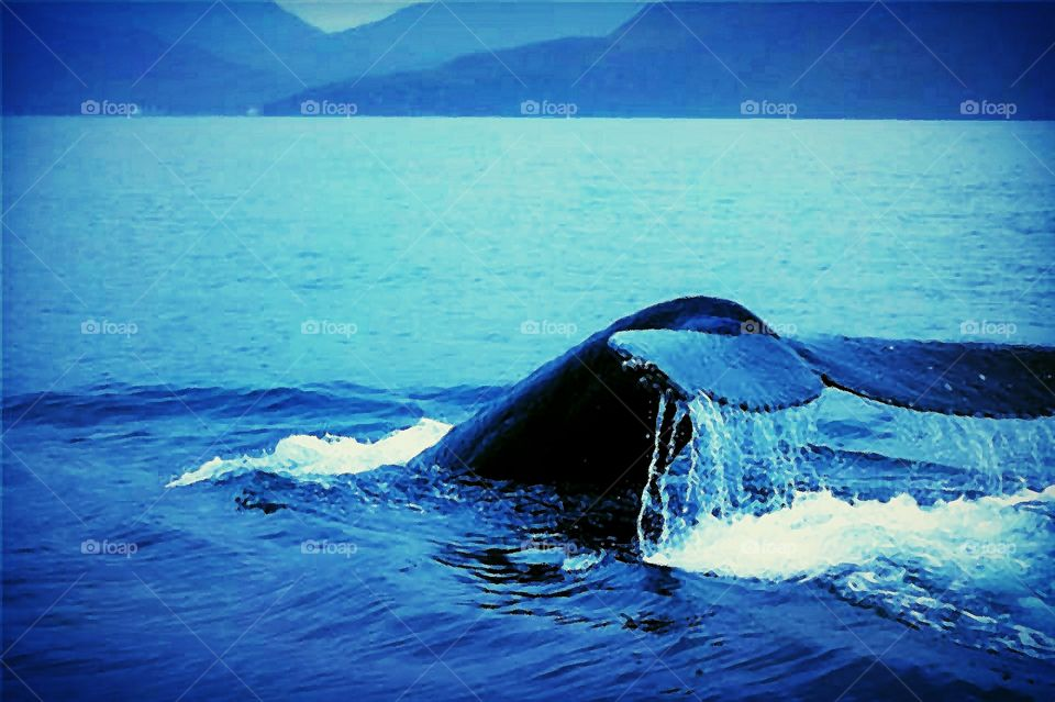 Whale in the Bering Sea