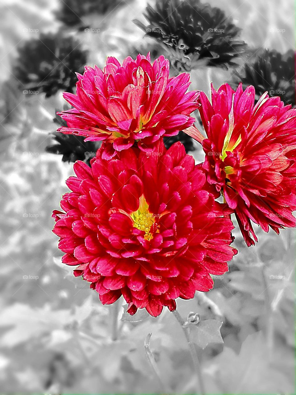 red falls flowers