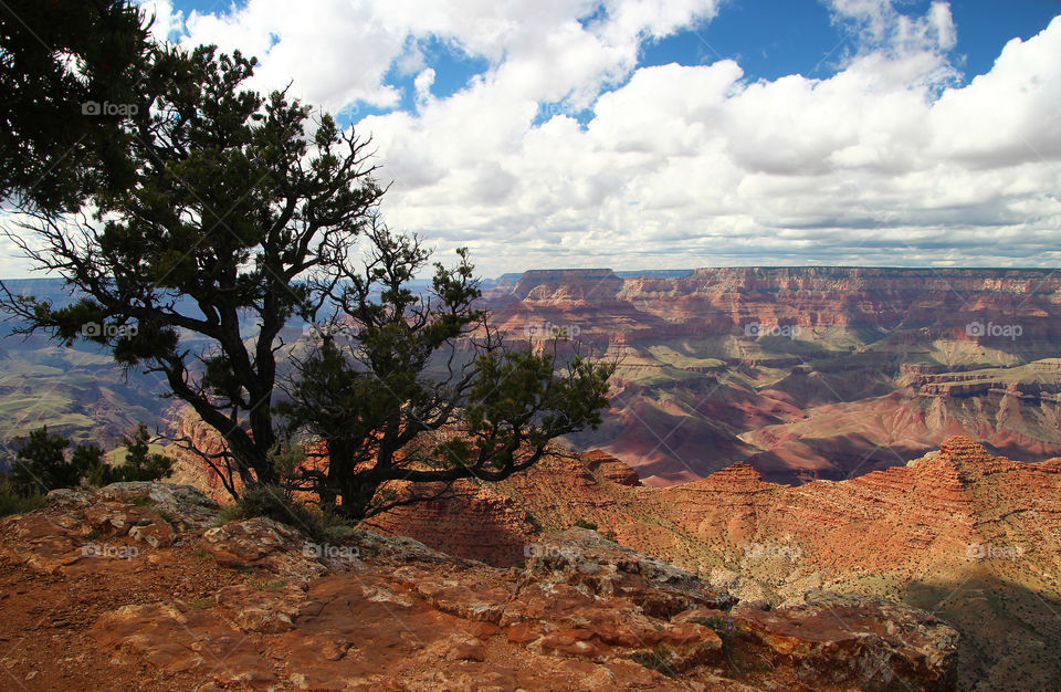 Grand Canyon south rim with juniper tree in foreground