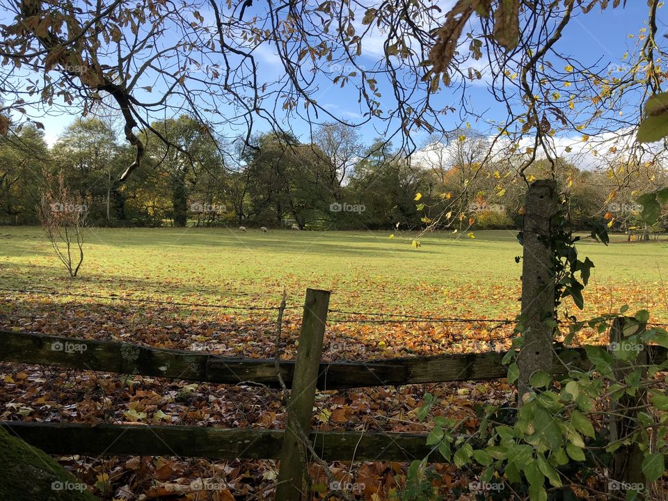 A glorious moment of autumn wonder today in the countryside of Bovey Tracey, UK