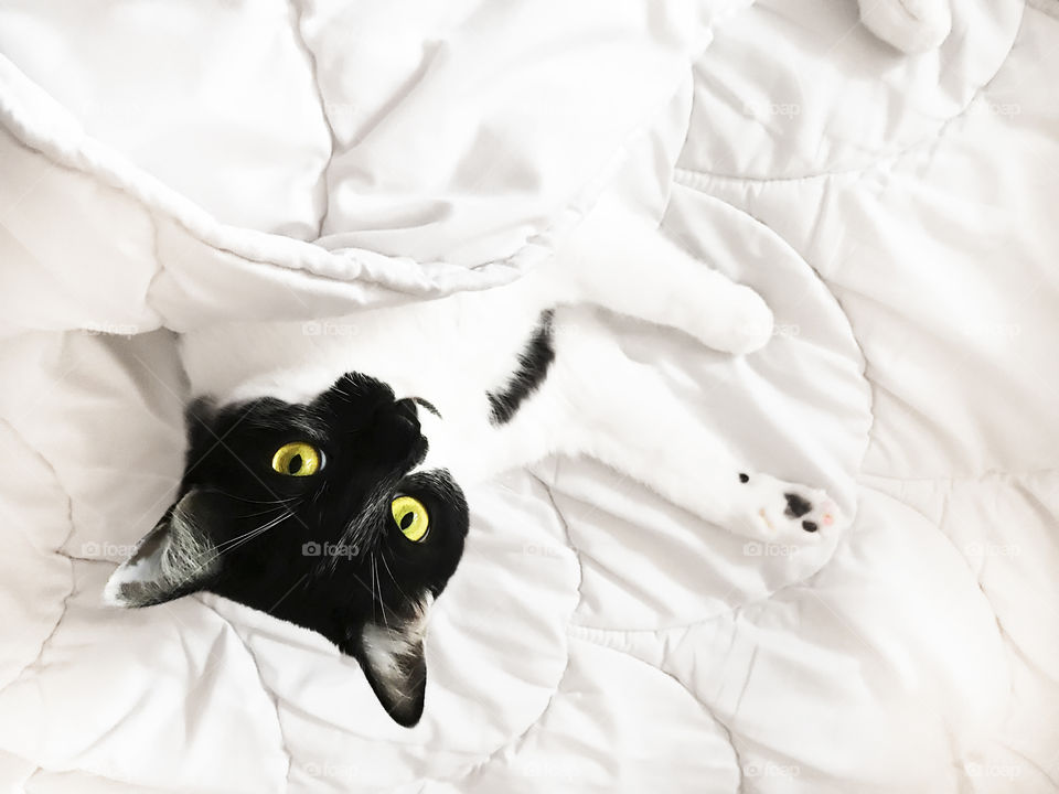 Cute cat with yellow eyes in white bed