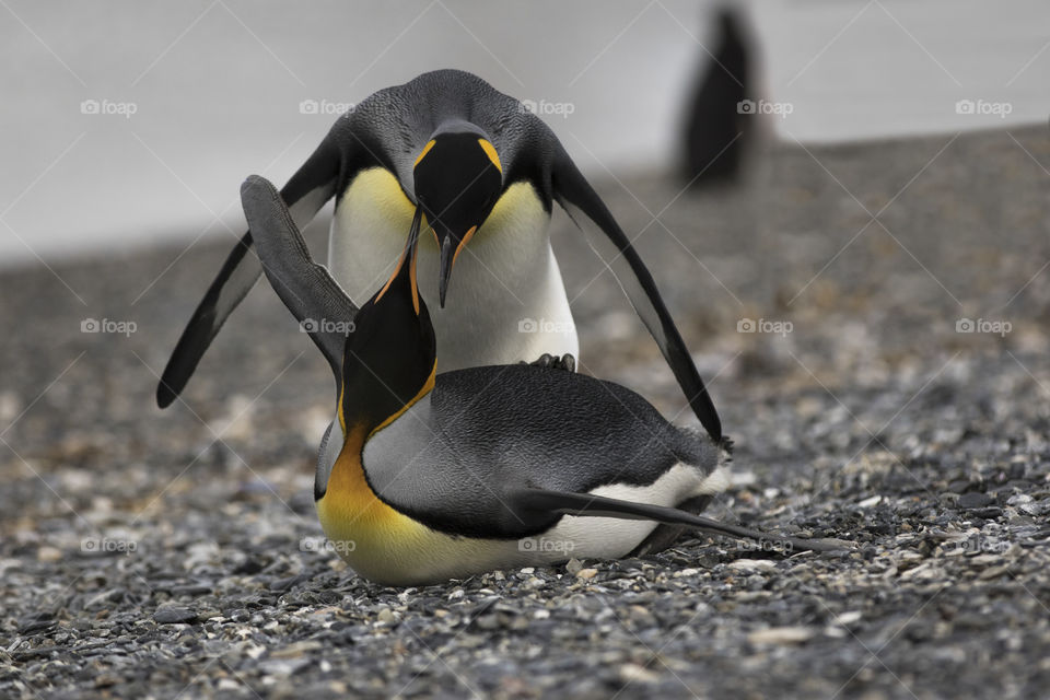 View of two penguins