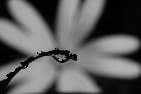 water drop blackandwhite abstract art conceptual flower