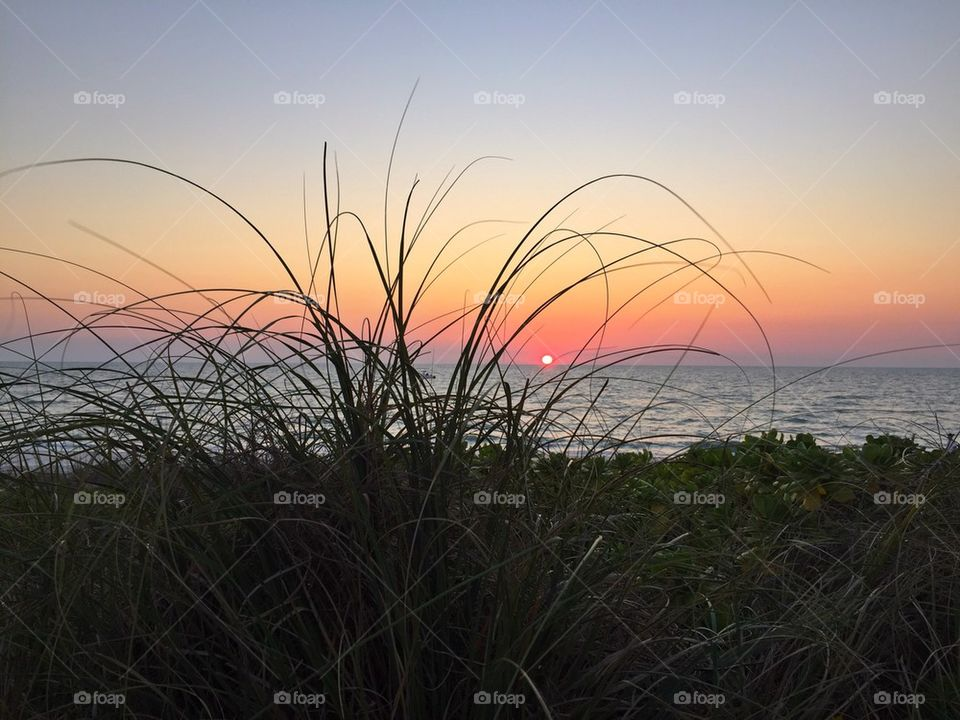 Seagrass at sunset