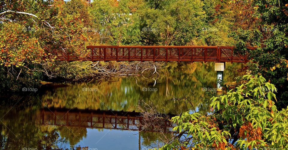 Color Bridge