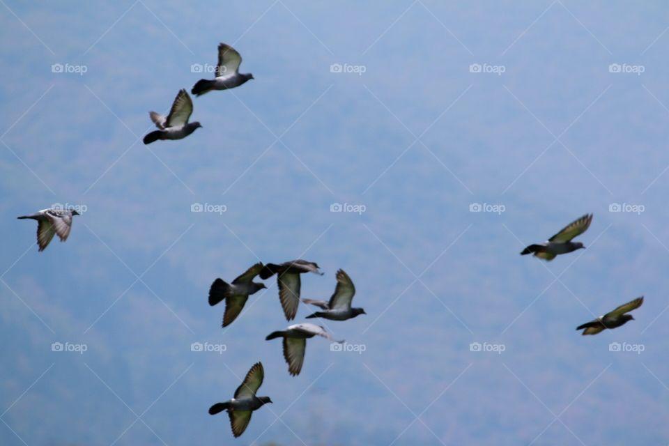 Bird, Wildlife, No Person, Goose, Flight