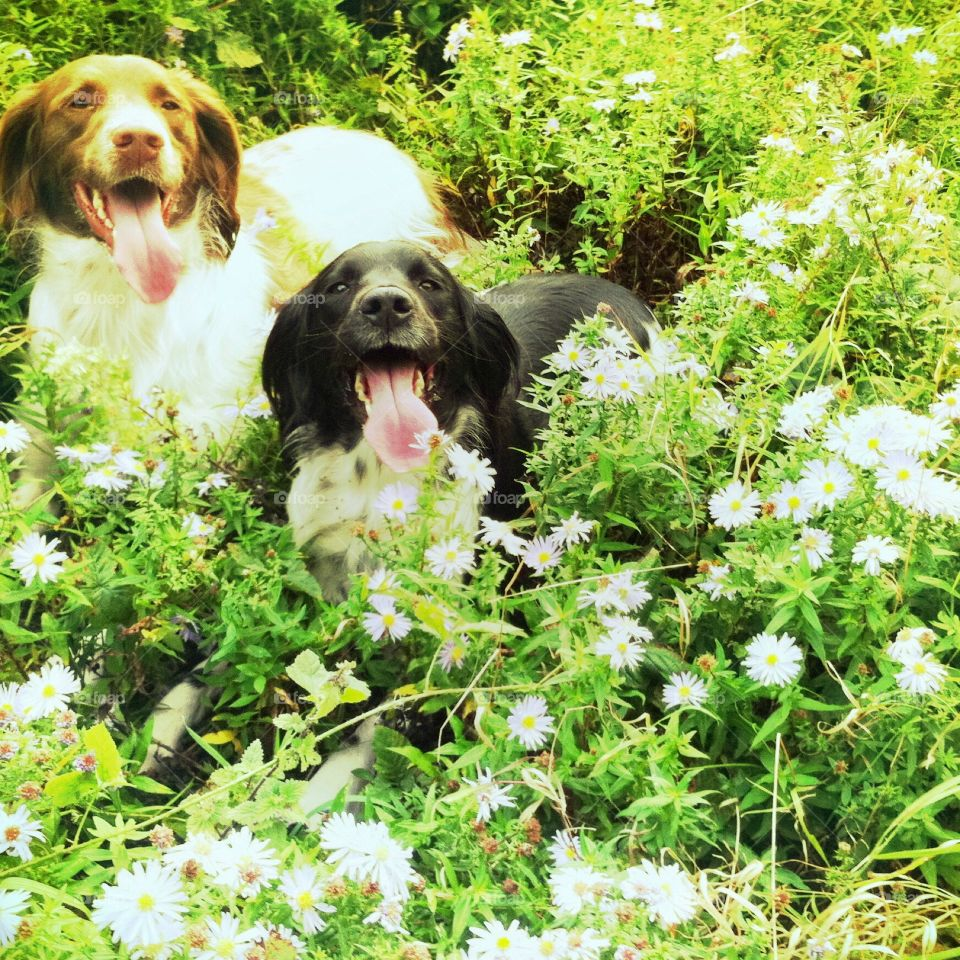 Willow and Daisy in the daisies